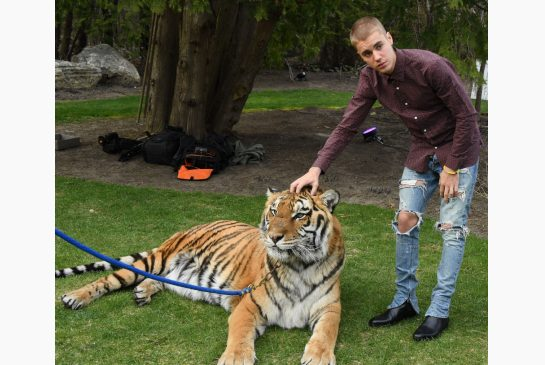 bieber-and-tiger.jpg.size.xxlarge.letterbox